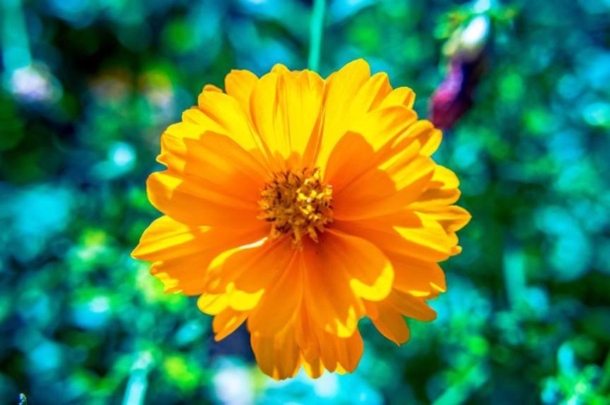 Pochese Flower
