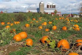Come Visit the Pumpkin Patch in the City forFREE